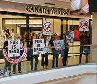 Los Angeles Fur BAN!